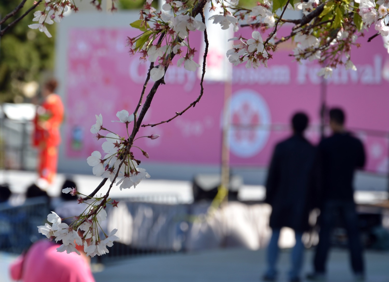 Curso Intensivo: Idioma Japonés
